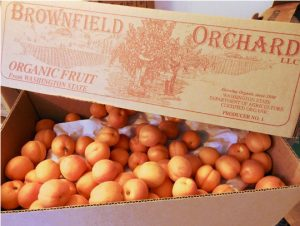 brownfield orchard 540